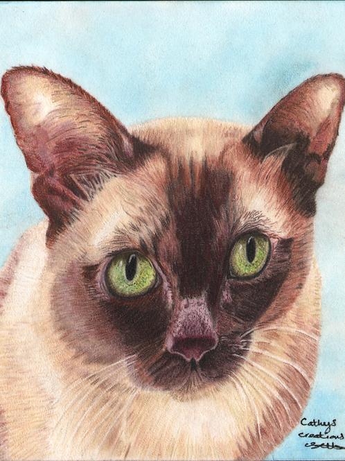 Charlie the Burmese Cat