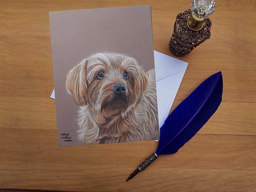 Molly the Norfolk terrier greetings card.