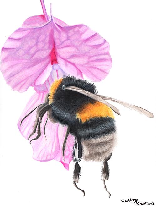 Bee on Himalayan Balsam