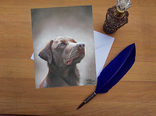 Chocolate Labrador greetings card