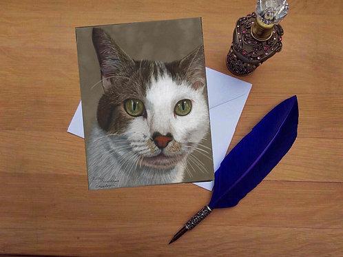 Jasper the cat greetings card.