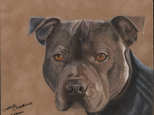 Max the Staffordshire Bull Terrier