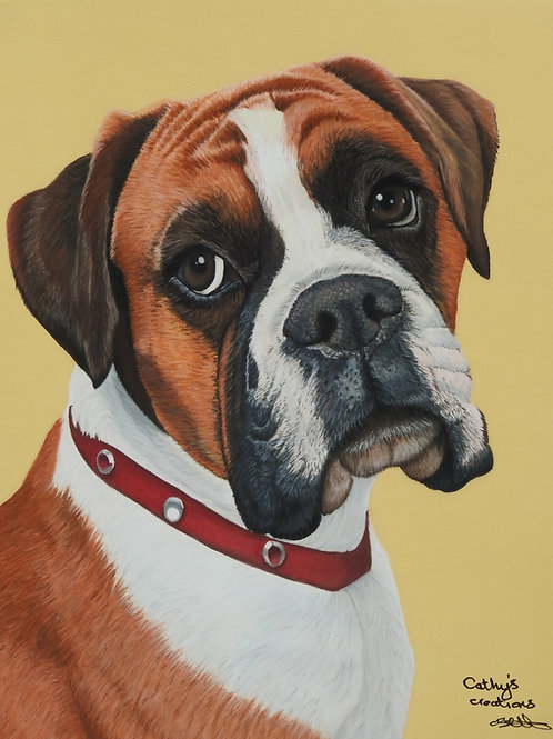 Elsie the Boxer dog