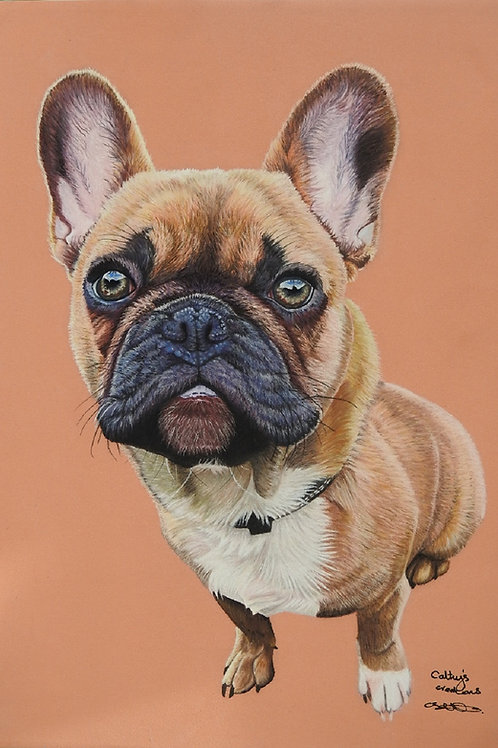 Ralphie the Frenchie