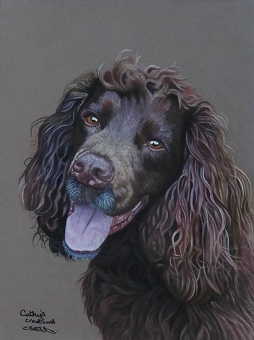 "Working Cocker Spaniel portrait, ""Fin"""