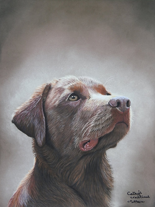 "Chocolate Labrador portrait, ""Senta"""