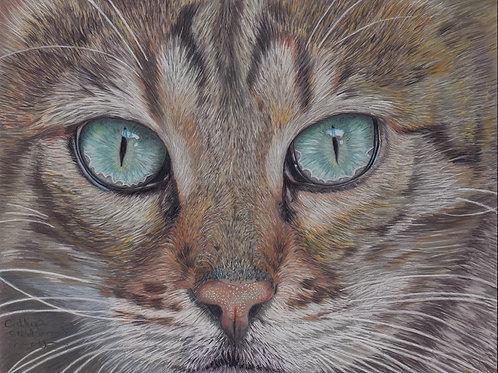 Gerald the bengal cat