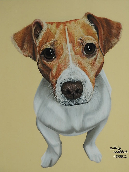 Sky the Jack Russell Terrier