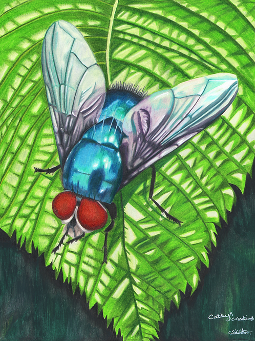 Blue Fly on a Leaf