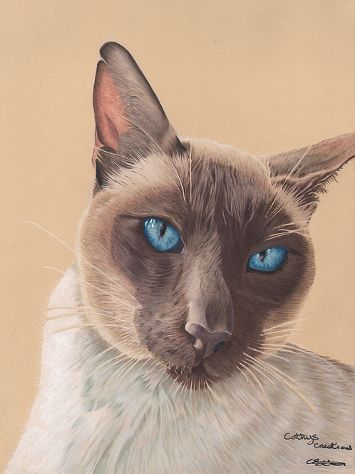 Blue Eyes the Siamese Cat
