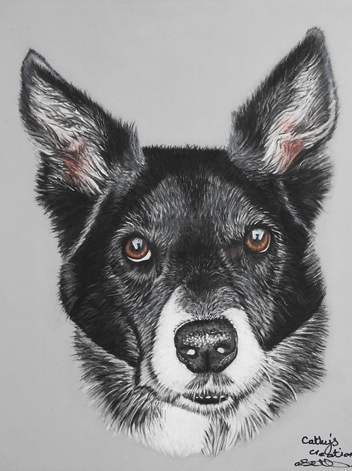 Bobo the Short haired Collie
