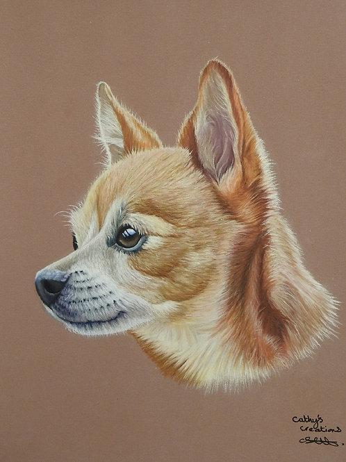 Pal the Chihuahua