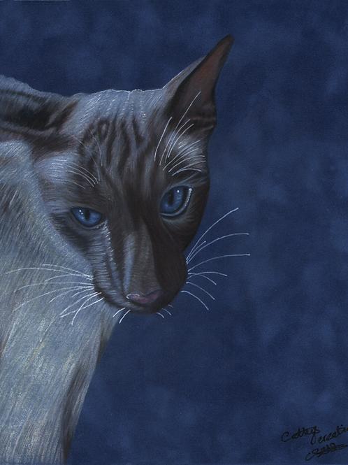 Blue Siamese Cat.
