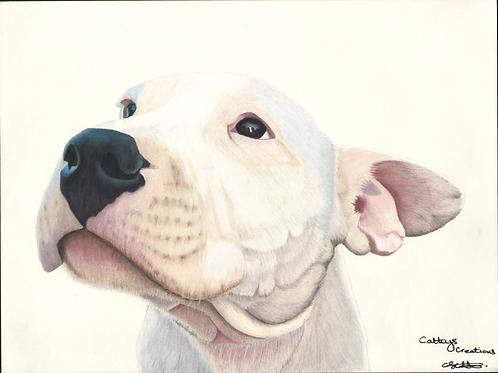 Troy the White Dog