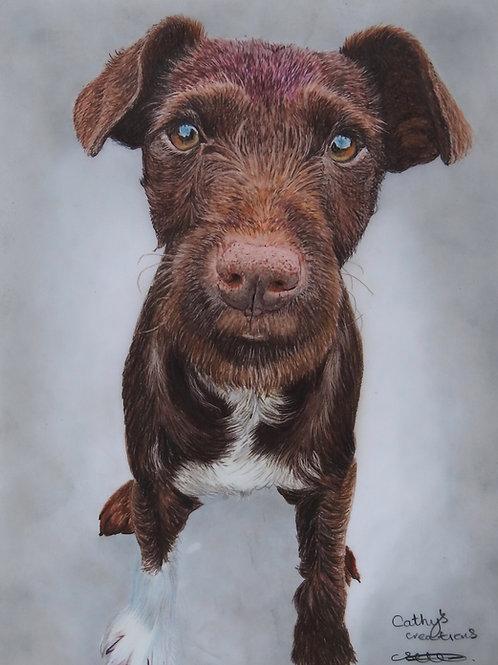 Joey the Patterdale Terrier