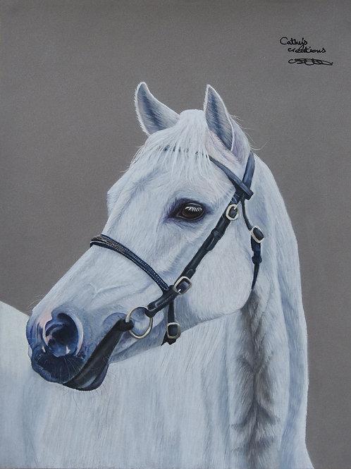 """White horse portrait, """"kyneton Moorlight"""""""