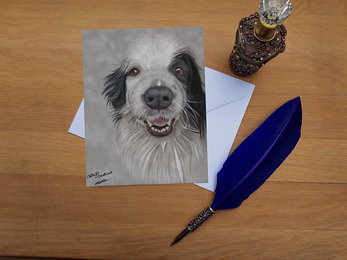 Rex the Border Collie greetings card.