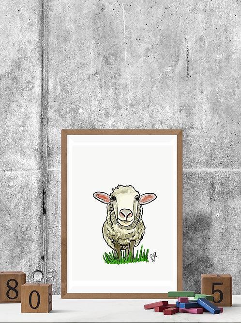Shep Sheep