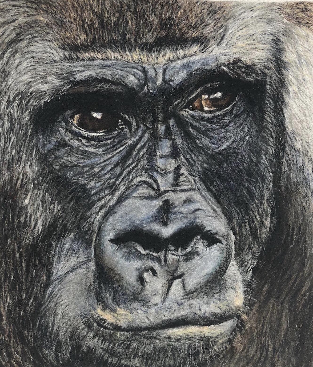 Daddy Gorilla
