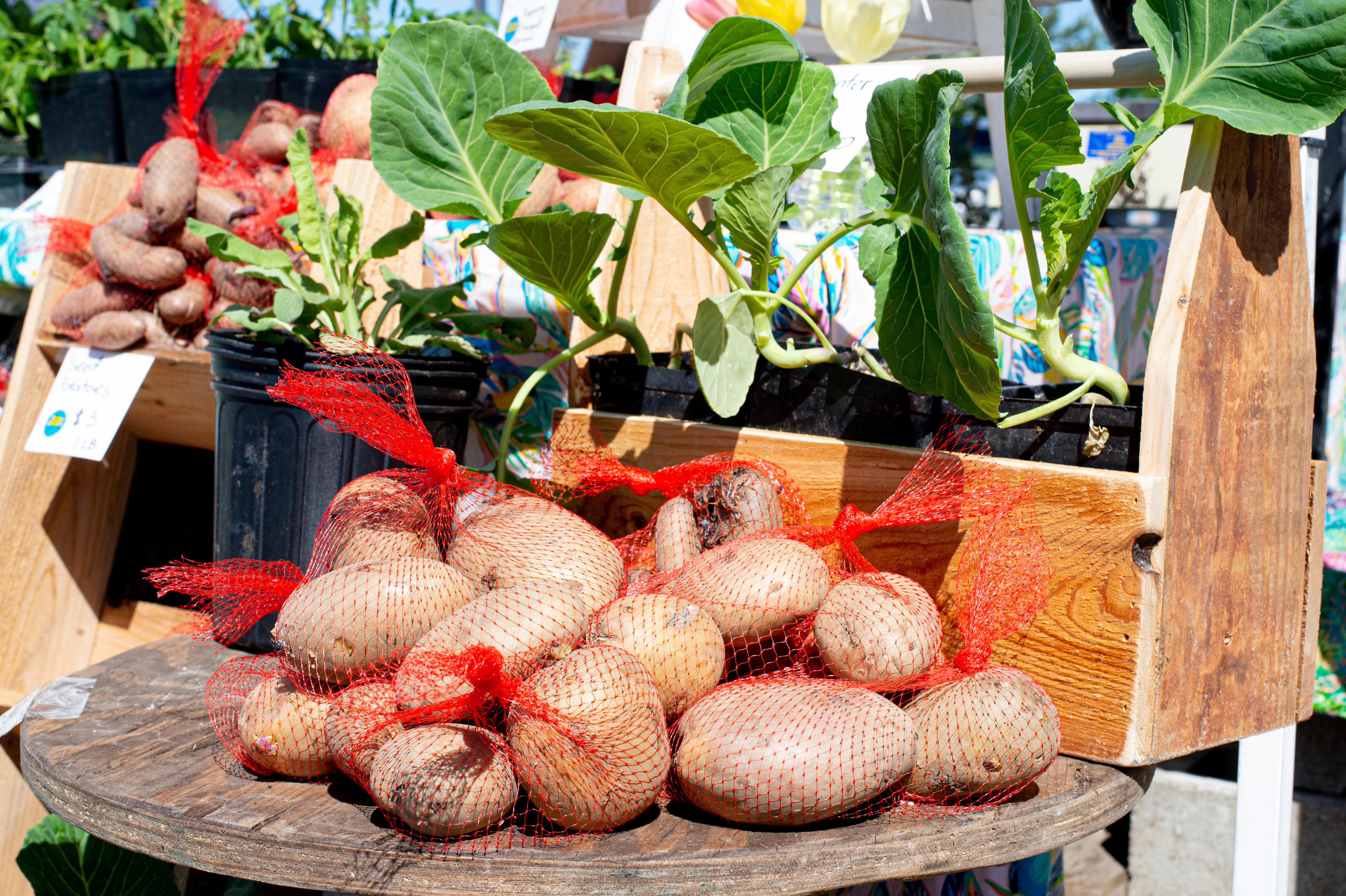 Farmer's Market Tour & Instruction