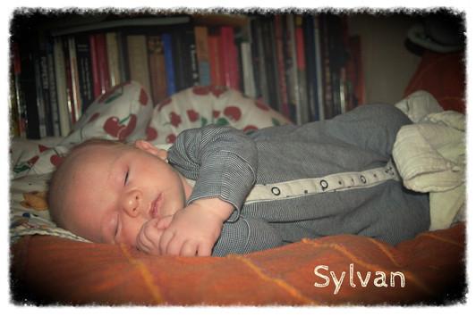 Bienvenido Sylvan!