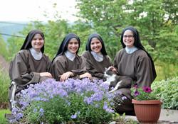 4 sisters cat