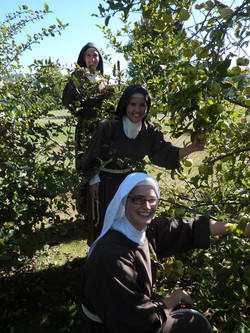 orchard 3 sisters