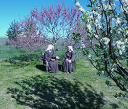 268_blossoms