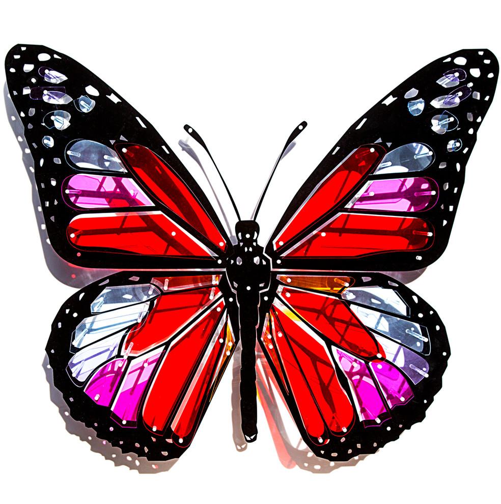 Papillon-face.jpg