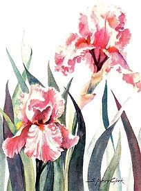 peach iris.jpg