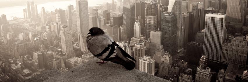4.6- new york.jpg