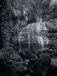 Home Bush Cascade, Whangateau
