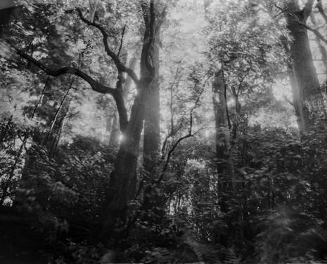 Sparkling forest, Dusk, Banks Peninsula. 2019