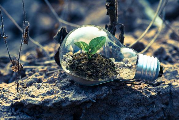 clear-light-bulb-planter-on-gray-rock-11