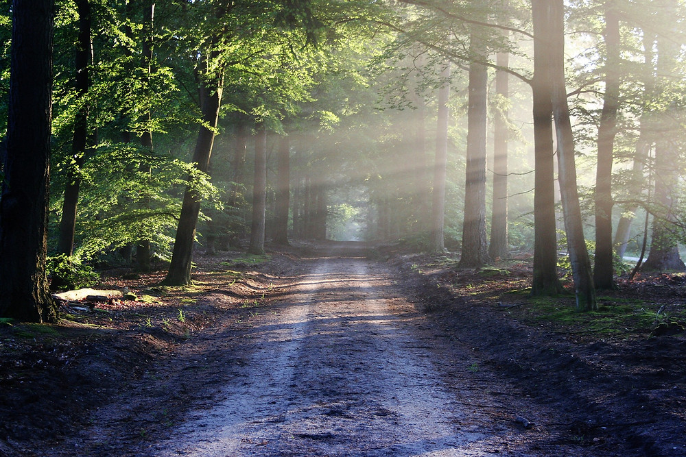 Morning Sun Coming Through Forrest on Old Dirt Road
