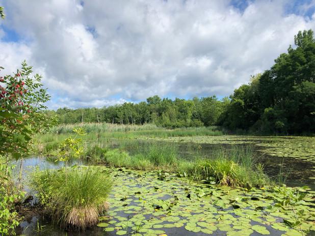 SLS_Bog_Meadow_Wetland_2.jpg