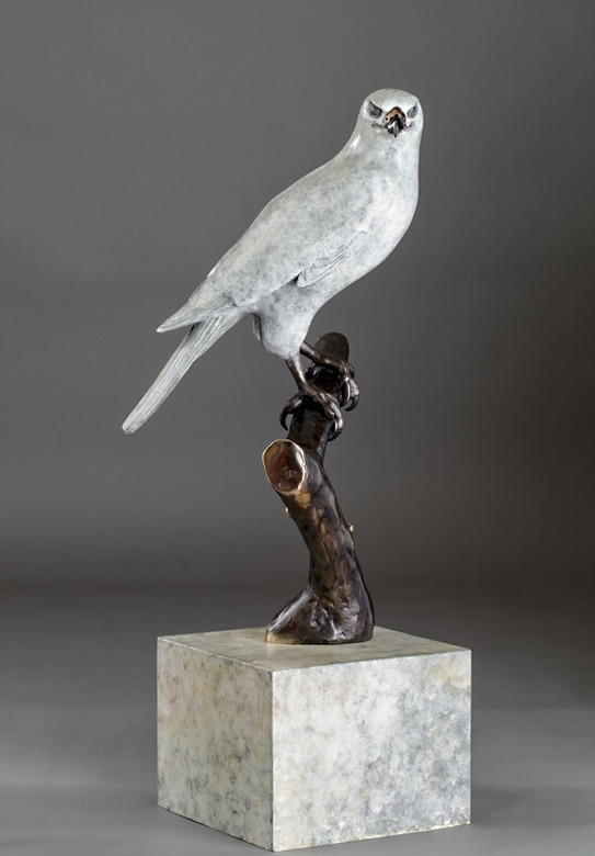 """""""The One and Only"""" Goshawk Bronze Sculpture Life Size"""