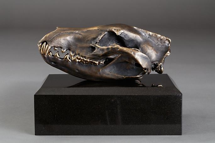 Tasmanian Tiger Scull