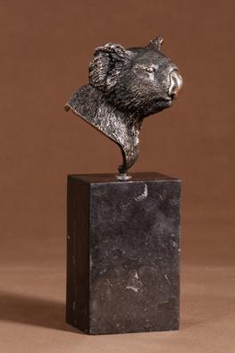Koala Head Portrait