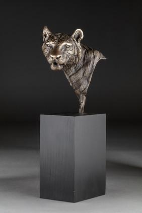 Tiger Head Portrait