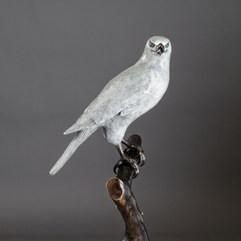 White Goshawk Bronze Sculpture by Australian Artist Jake Mikoda