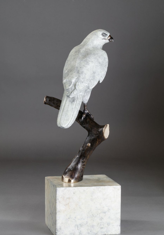 """""""The One and Only"""" Goshawk Bronze Sculp"""