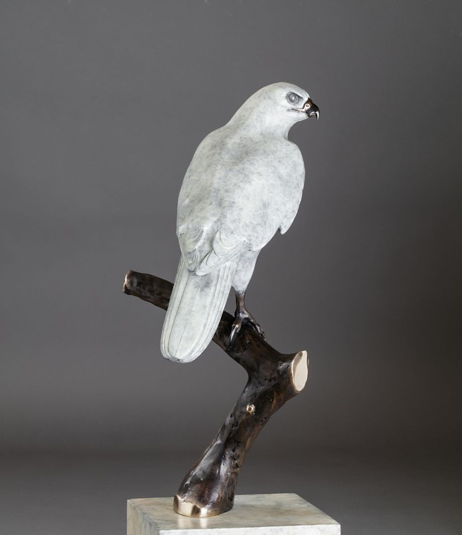 """The One and Only"" Goshawk Bronze Sculp"