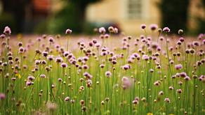 Frei durchatmen –trotz Pollen-Saison und Corona-Viren