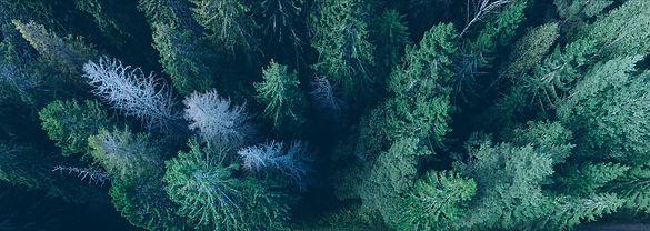 Wald - Moodbild