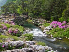 Wasseraufbereitung – mit der Natur als Vorbild
