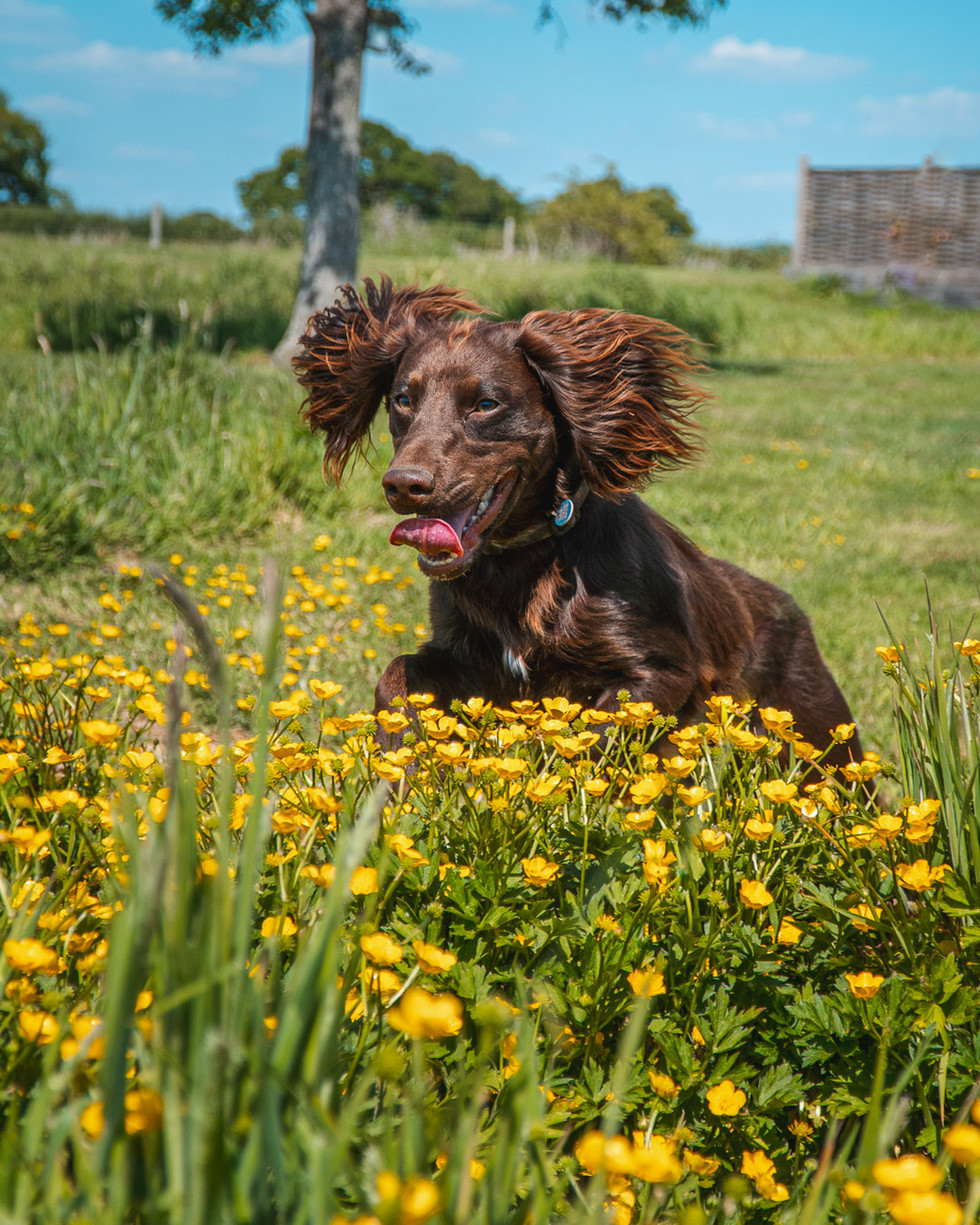 Running Dog-3.jpg