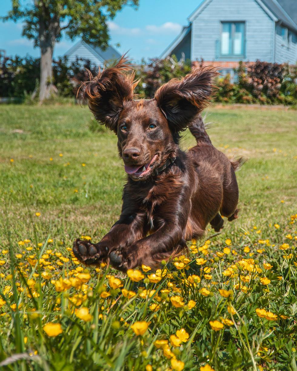 Running Dog-2.jpg