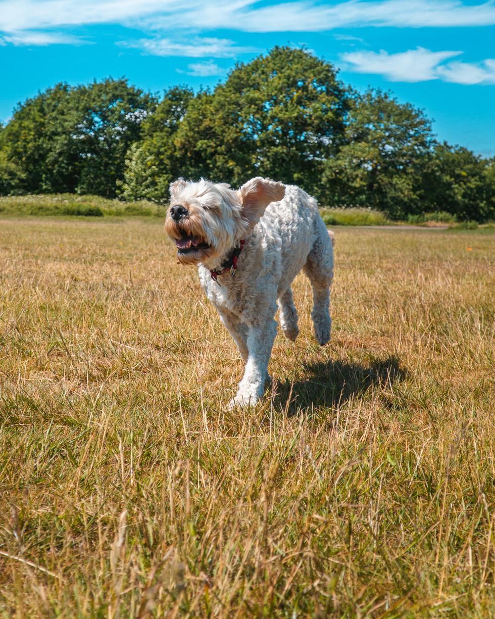 Running Dog-8.jpg