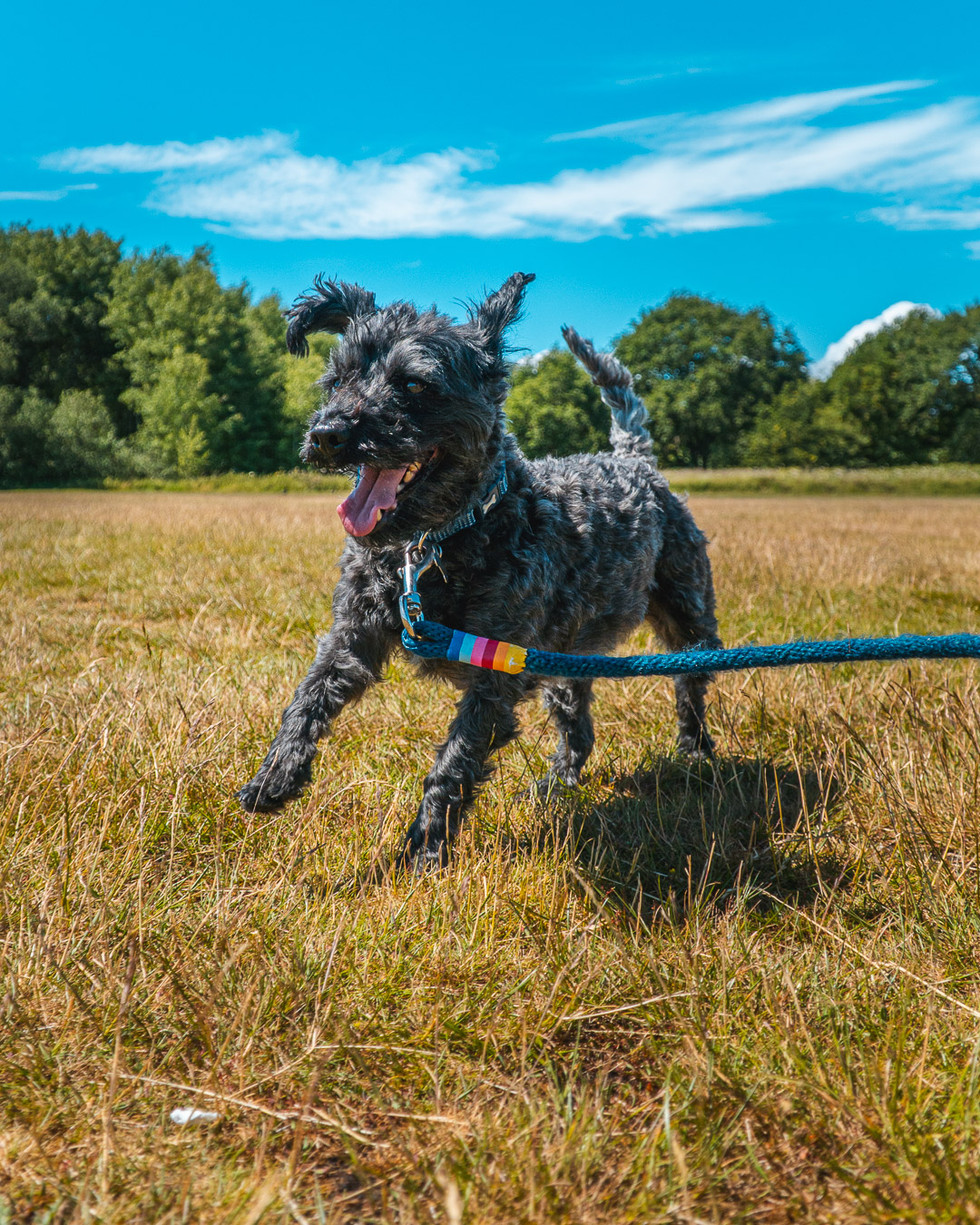 Running Dog-5.jpg